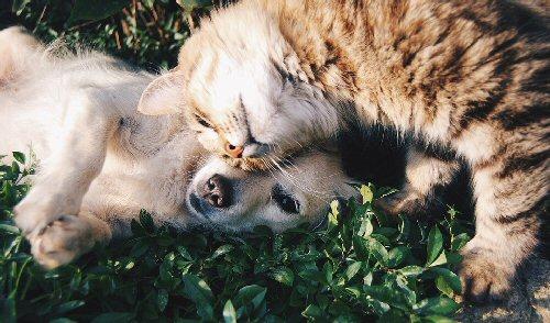 04d 500 friendship dog cat