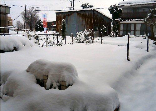 00a 500 20190103 snow LLgarden