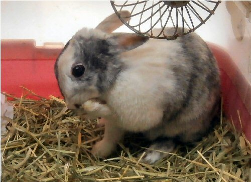 01de 500 20190104 Koharu warming her leg in cage