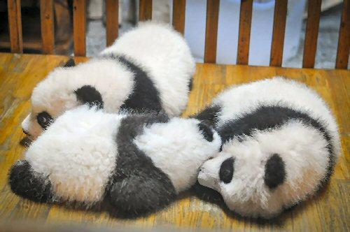 03a 500 sleeping baby pandas