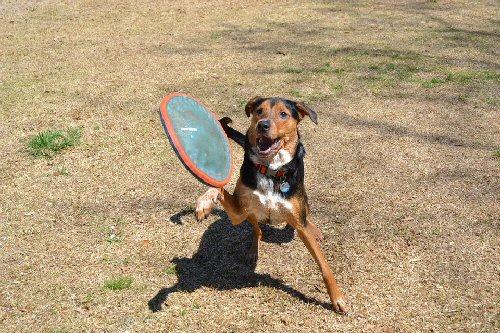 04a 500 dog fetch frisbee