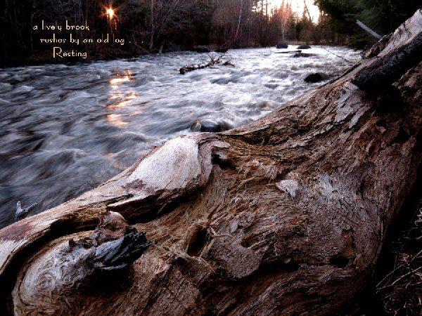04a 600 20150520 (水) a lively brook