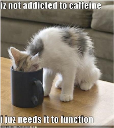 03ac 500 cat loves coffee