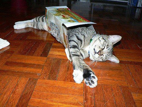 04a 500 cat in a Kleenex