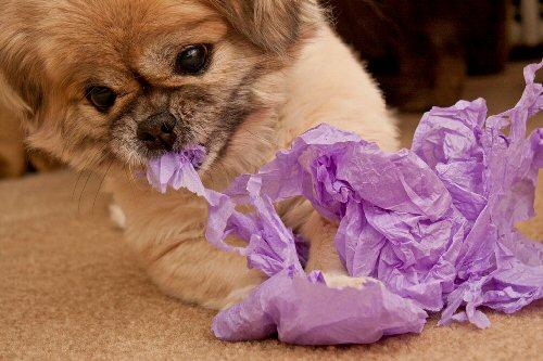 04b 500 puppy is ripping tissue