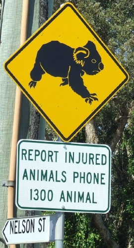 09c 500 report injured animals sign