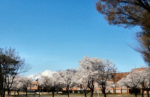 01e 500 190413 Mt Myoko CherryBl