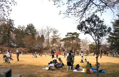 01ab 500 経塚山桜広場01