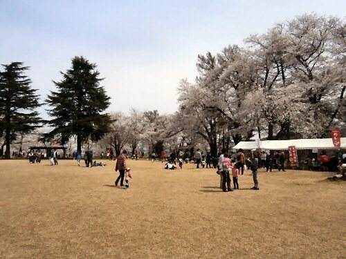 01b 500 経塚山桜広場02
