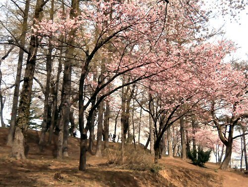 01c 500 経塚山桜east side