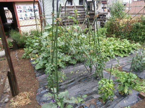 01a 500 LL garden growing
