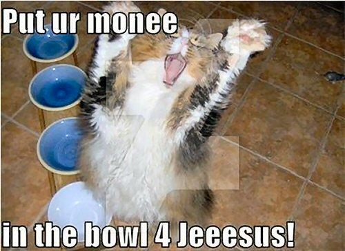 02c 500 put money lol cat