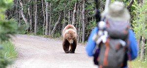 03c 300 staying safe around bears