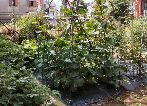 01d 500 LL garden