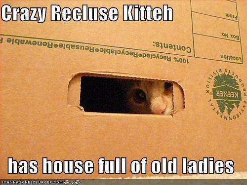 09d 500 crazy recluse kitten