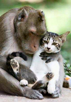 09b 300 monkey with cat