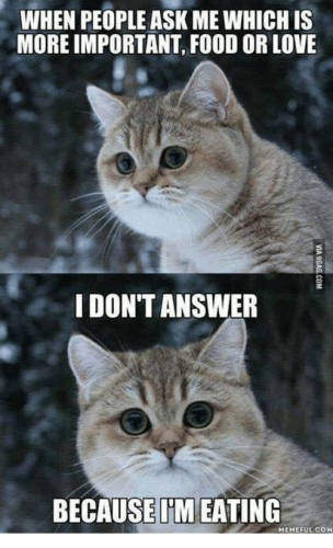 09b 500 cat lol common knowledge