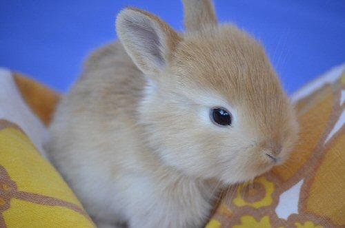 04e 500 baby bunny