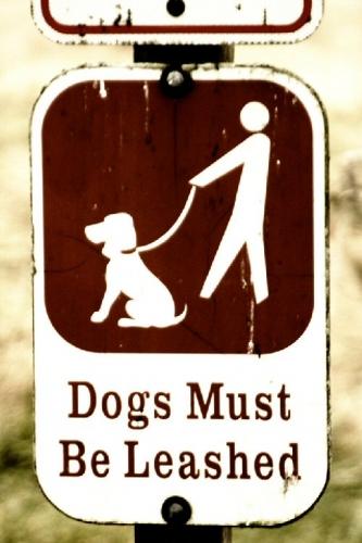 09aa 500 put yo dogs