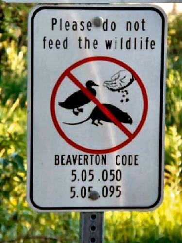 09eb 500 code of Beaverton
