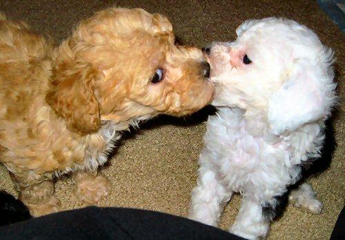 03e 500 adorable puppies