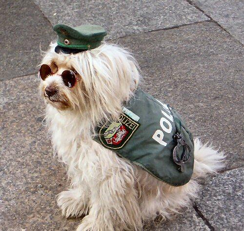 09b 500 police dog
