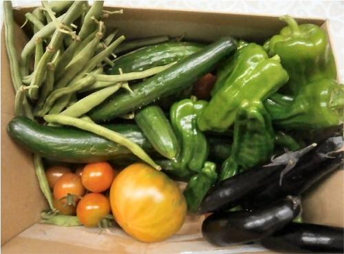 01a 600 190706 fresh vegetables