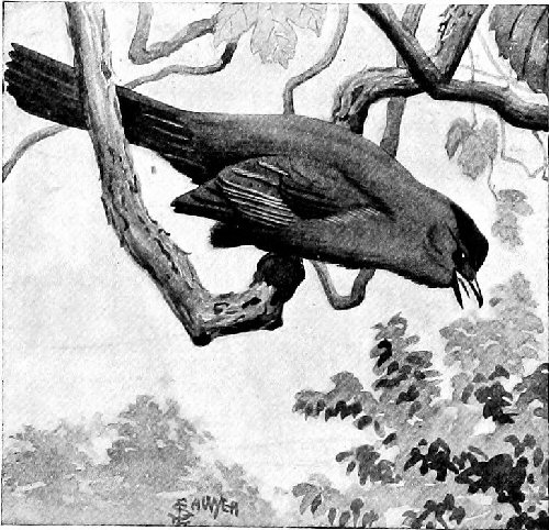 04f 500 shocked raven