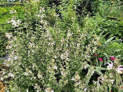 02b 500 190715_Herbs LL-garden