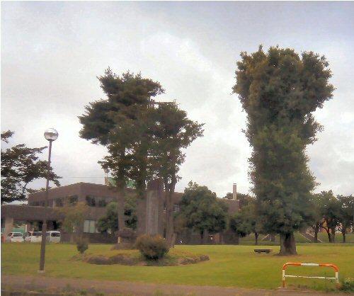 02Fa 500 190716 トトロの木