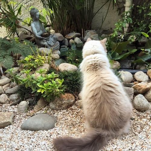 09e 600 瞑想猫