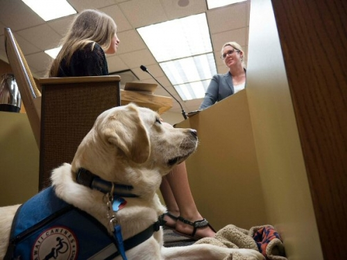 09d 600 facility dog in court