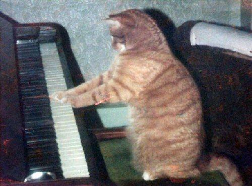 03b 500 cat pianist