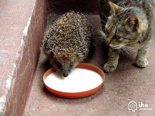04b 500 hedgehog and cat