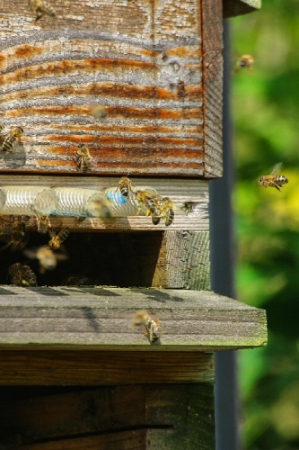 03b 500 bees buzzing