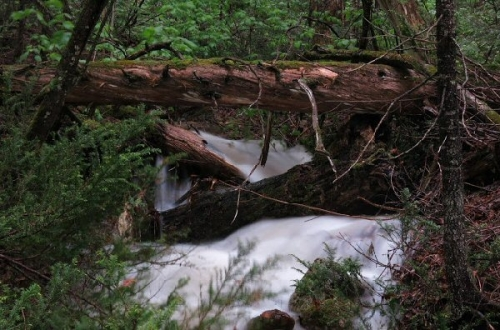 03c 600 20150806 (木) No1-2 A forest stream