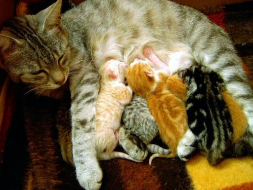 09d 600 cat and her 6 kittens