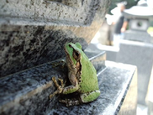 01a 500 tomb with a frog