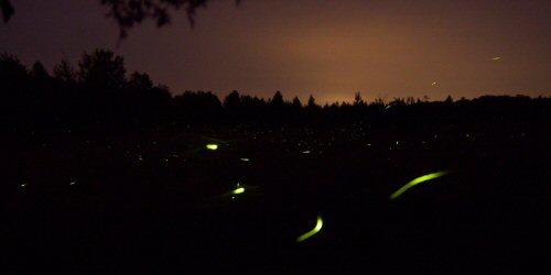 03c 500 firefly after nightfall