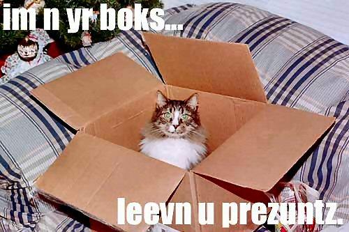 09b 500 cats present