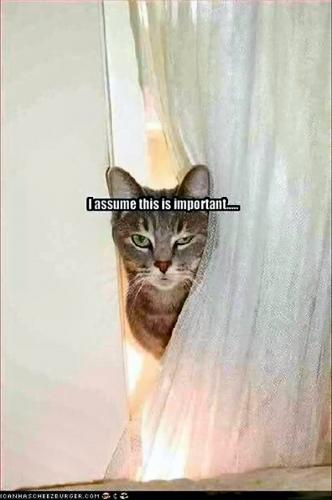 04b 600 assuming cat