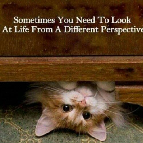 09ca 500 cat diffrent perspective