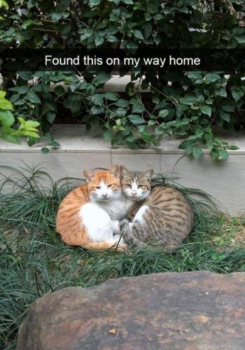 09d 600 hilarious cat memes
