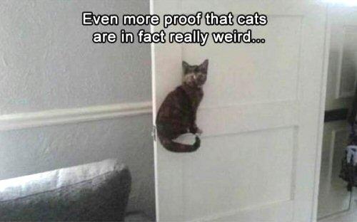 09a 500 weird cat