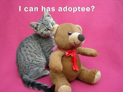 09d 500 I can have adoptee