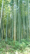 torayakoubo2.jpg