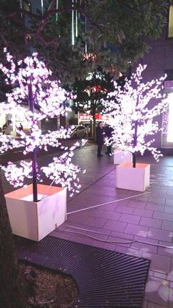 yaesusakura2.jpg