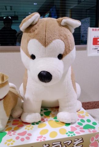 秋田犬2019010100011