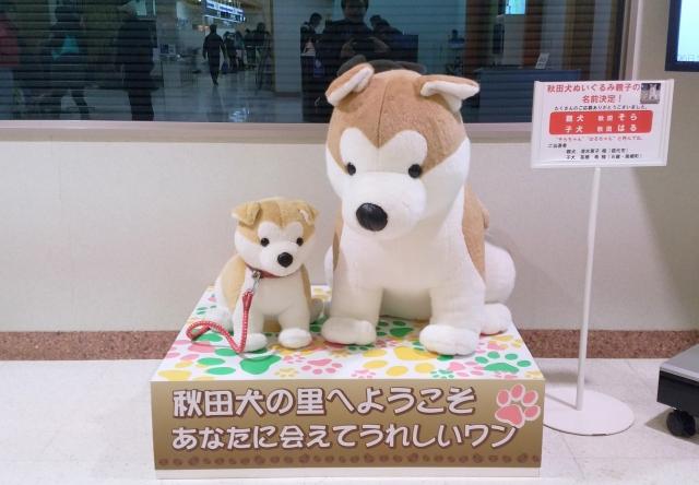 秋田犬2019010100013