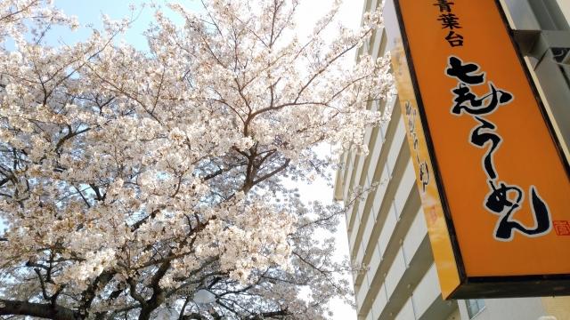 桜 20190400001
